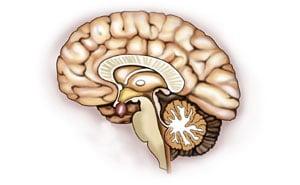 Адипозогенитальная дистрофия: причины, симптомы, лечение
