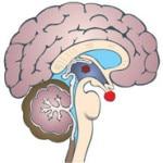 Гипофизарный нанизм — что это такое, симптомы, лечение