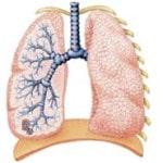 Хроническая обструктивная болезнь легких (ХОБЛ) — симптомы, лечение