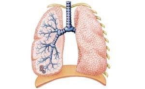 Хроническая обструктивная болезнь легких (ХОБЛ): симптомы, лечение