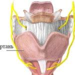 Отек гортани — причины, симптомы, лечение