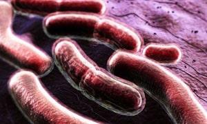Туберкулез - симптомы, первые признаки