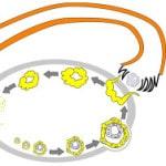 Желтое тело в яичнике — что это такое, недостаточность желтого тела