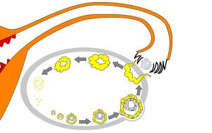 Желтое тело в яичнике: что это такое, недостаточность желтого тела